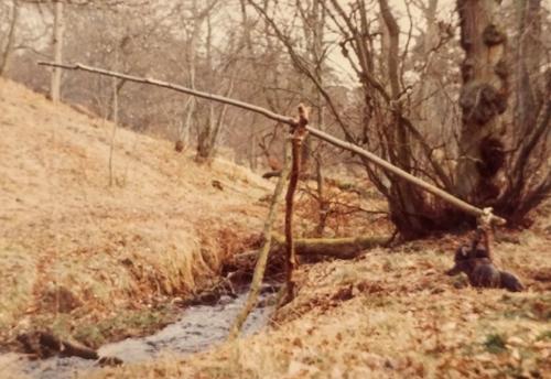Log Trap 1983